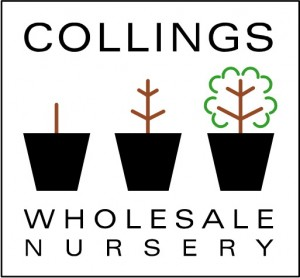 Collings Wholesale Nursery